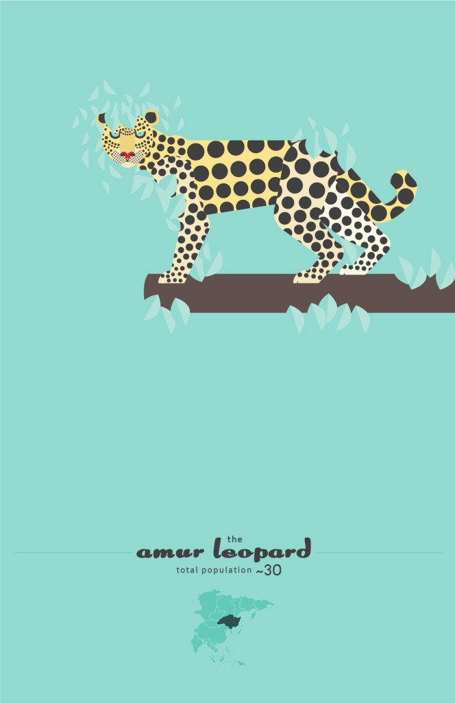 Amur Leopard by Sean Duggan