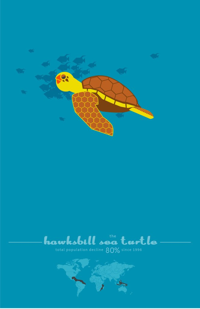 The Hawksbill Sea Turtle by Sean Duggan